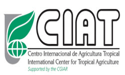 International Center for Tropical Agriculture