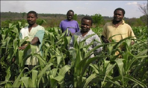 CSIR - SARI engage farmers on fall armyworm
