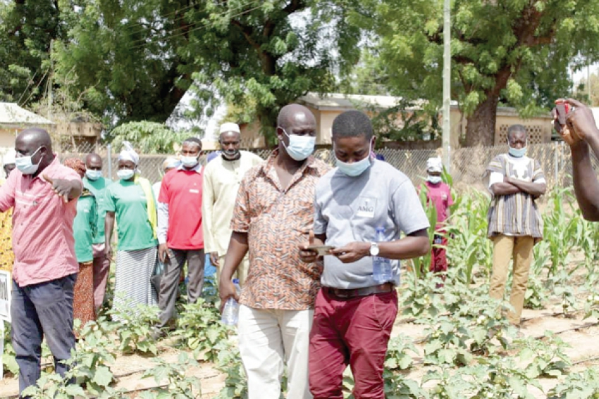 Farmers Schooled on Effective AMG Fertilizer Application